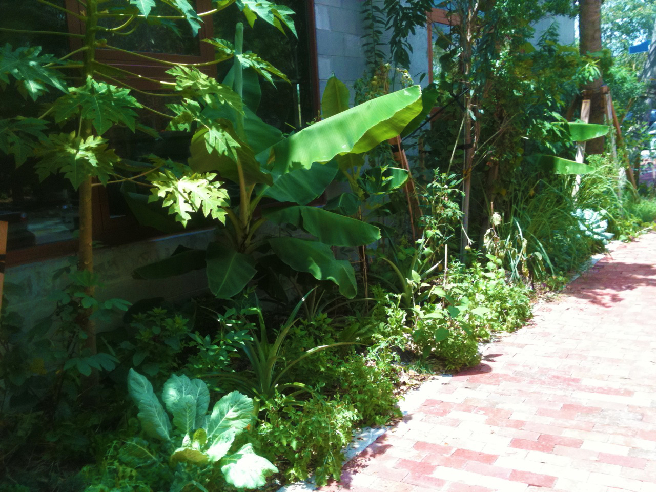 Edible Landscaping At Arquitectonica Office In Coconut Grove