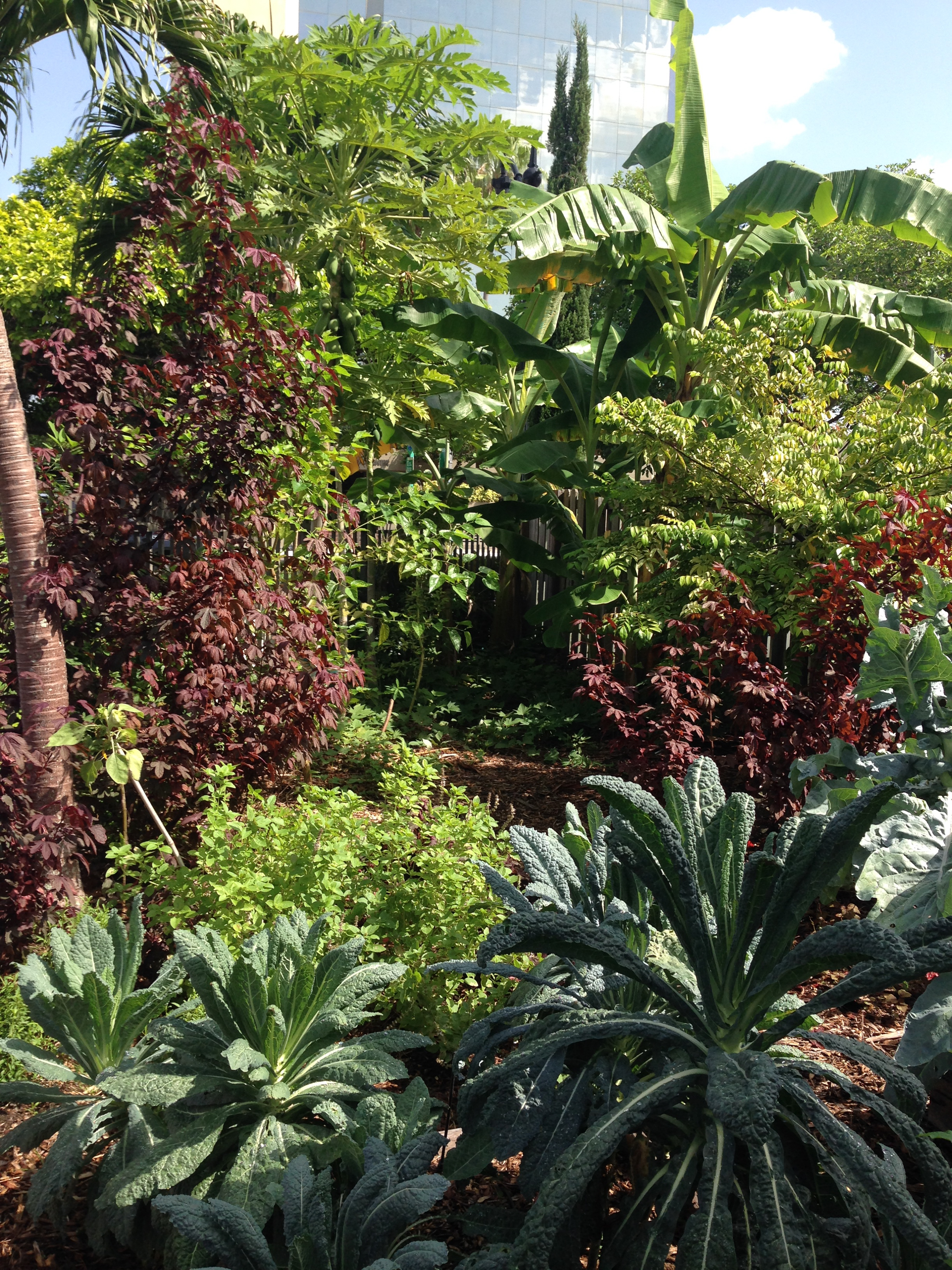 Food forests in Miami fruit tree planting service