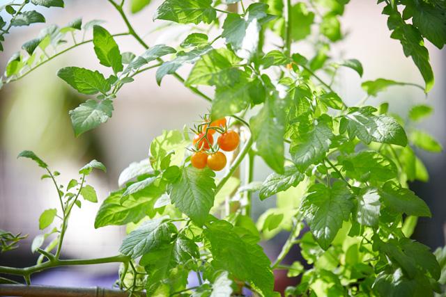 edible plants