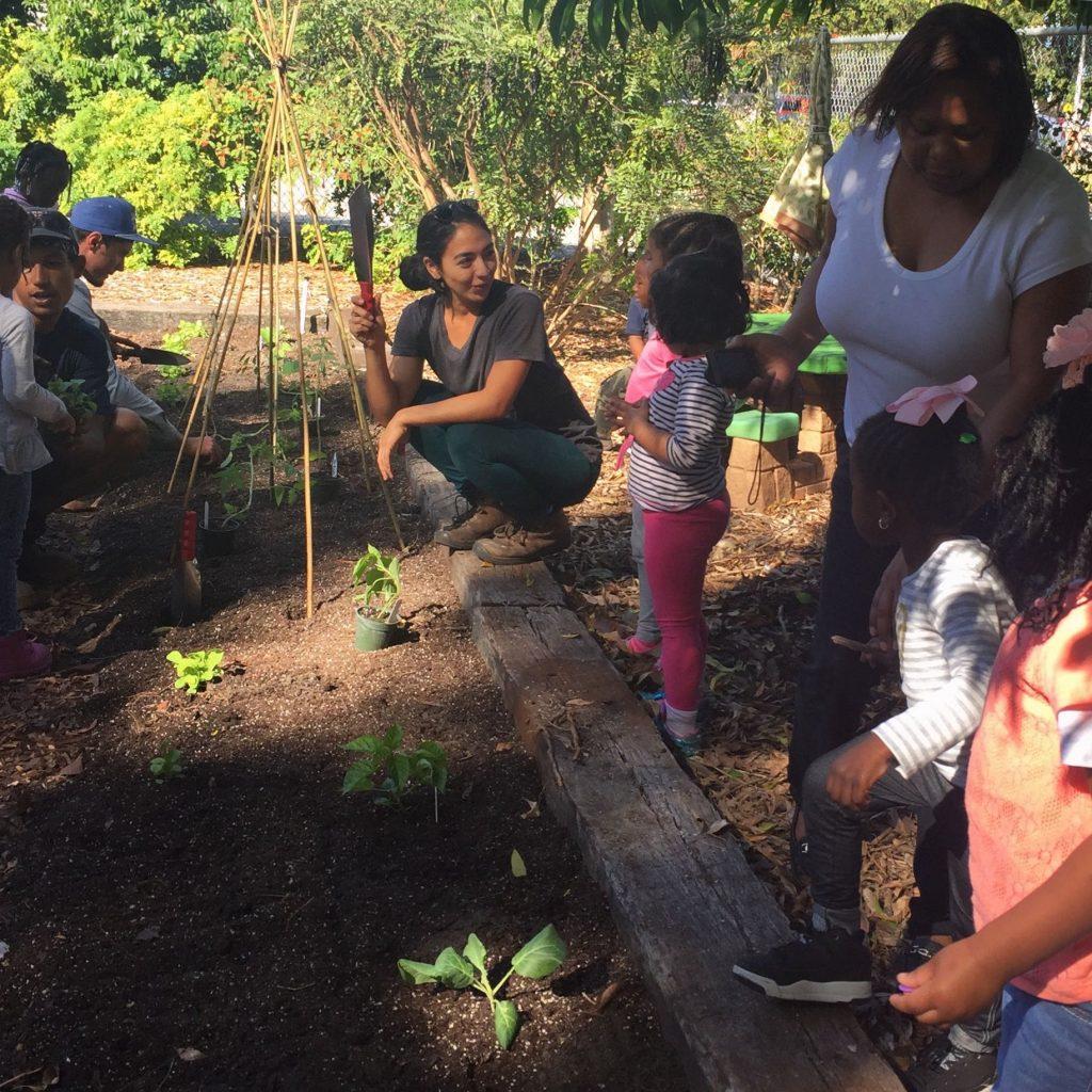 edible school gardens