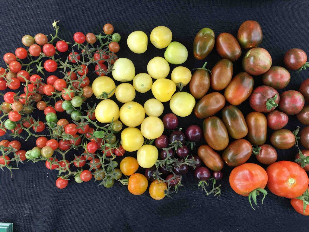 tomatospread