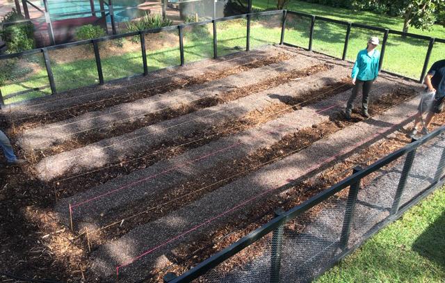 starting a vegetable garden mini farm