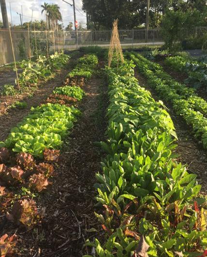 grow food in South Florida in mini farm