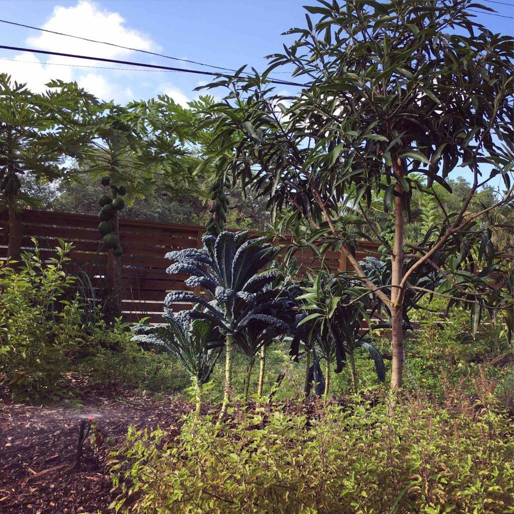 edible food forest landscape