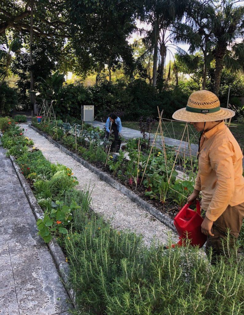 edible garden at Vizcaya