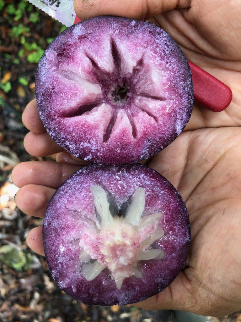 Caimito Star Apple