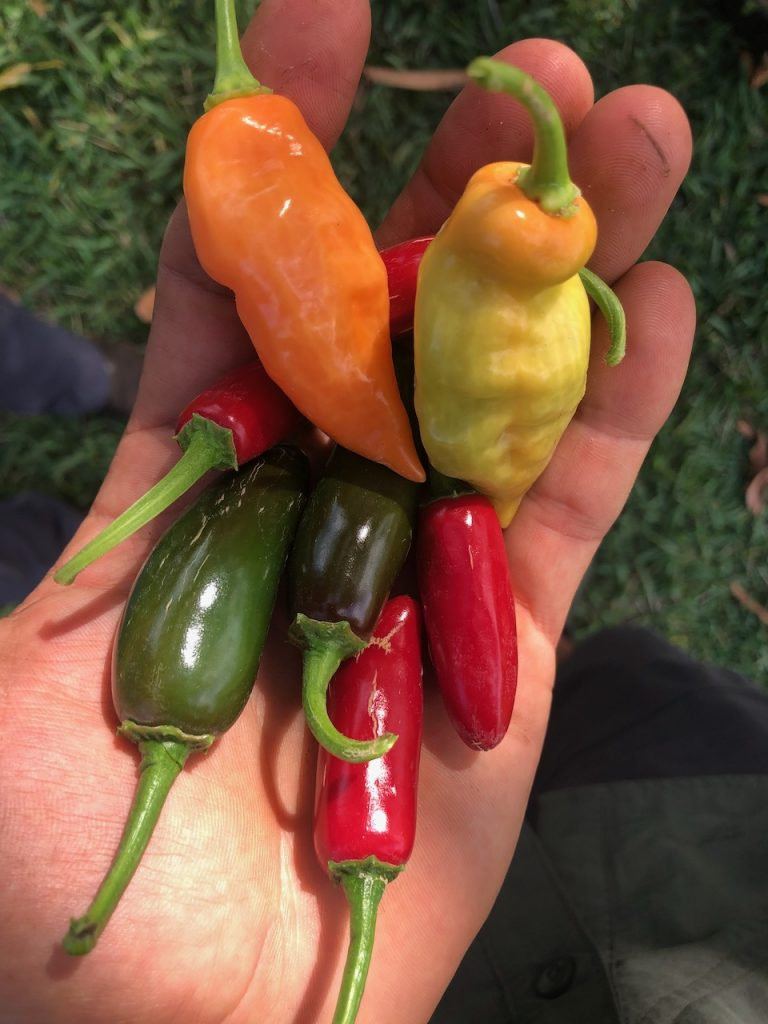 Habanada and other mixed peppers