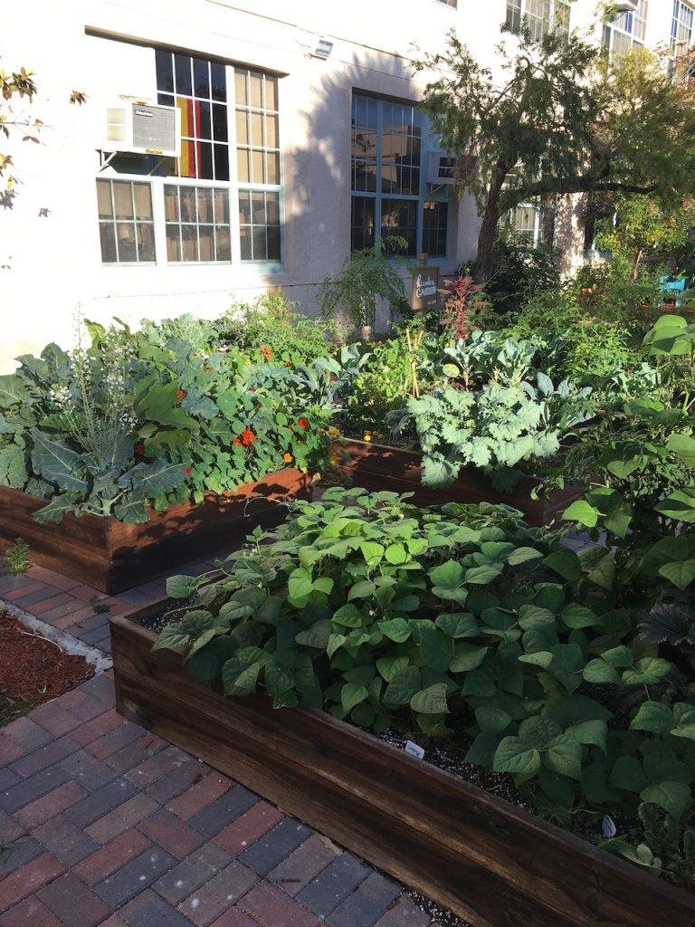 Garden beds at school