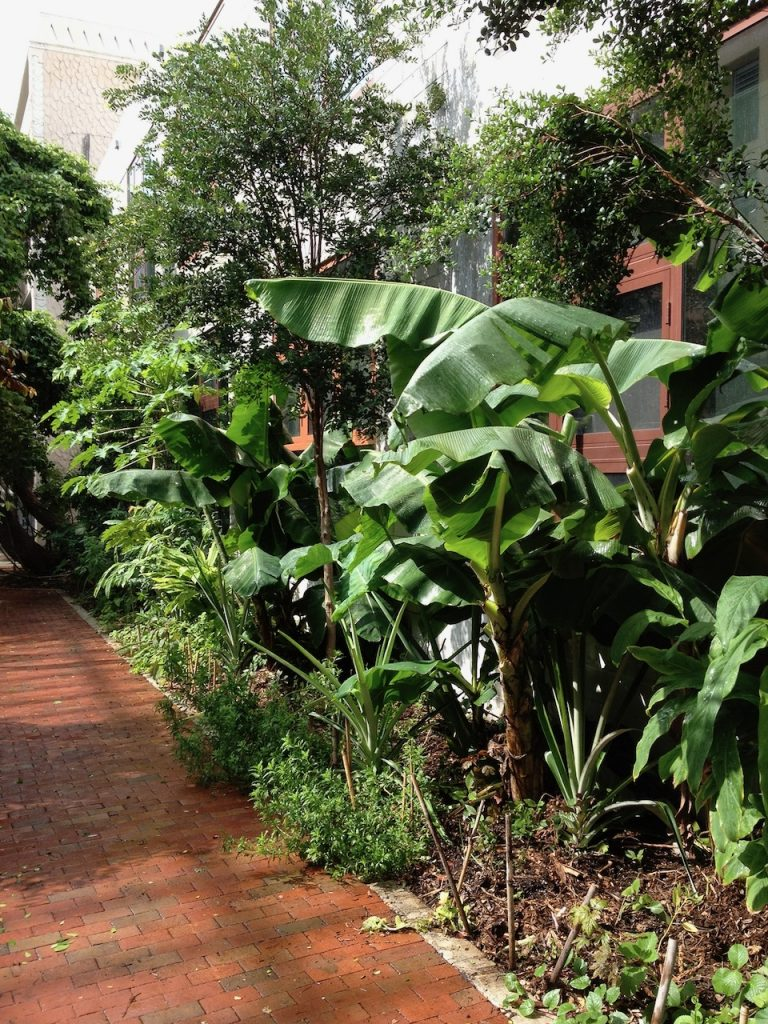 Edible lanscape at Arquitectonica office in Coconut Grove