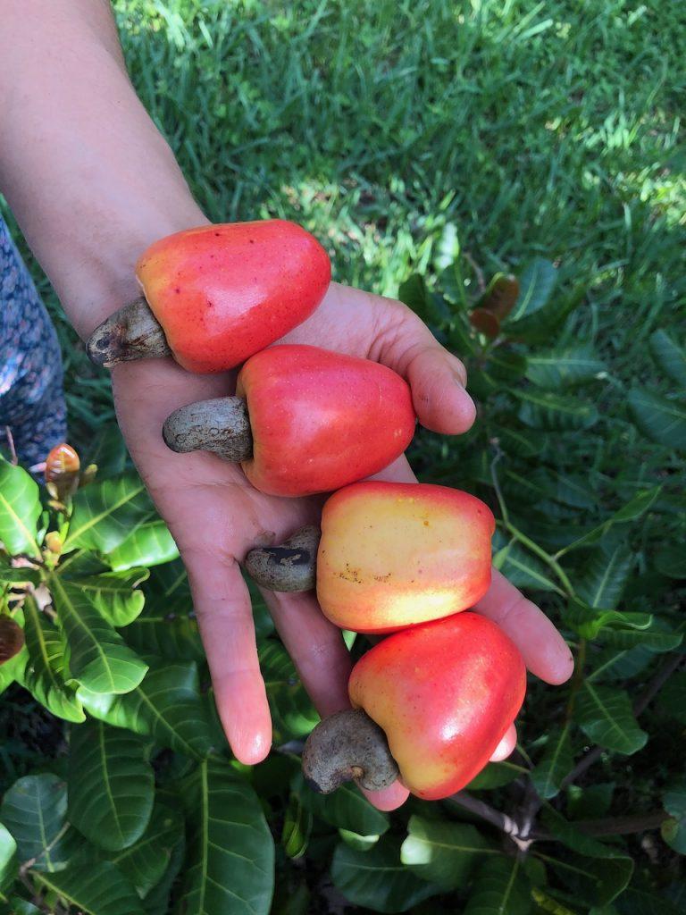 Cashew aka Marañon fruit
