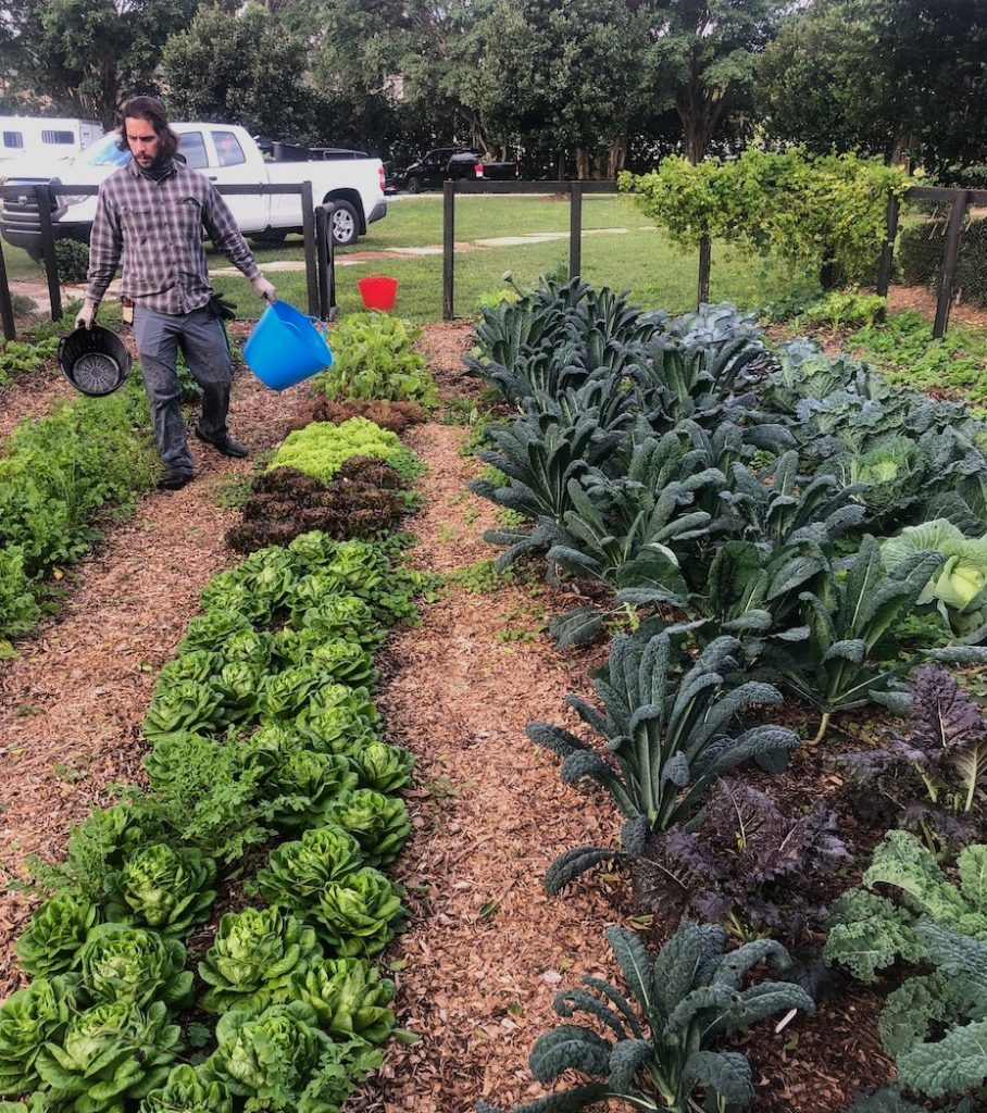 planting vegetables in South Florida in mini farm